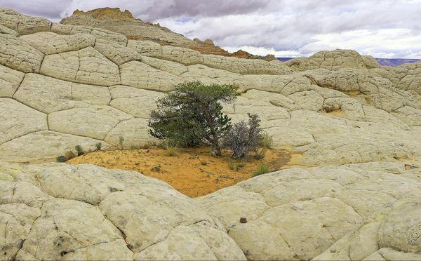 Brain Rock White Pocket Arizona